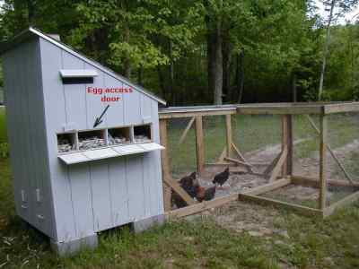 Diy chicken coops for Building a hen house